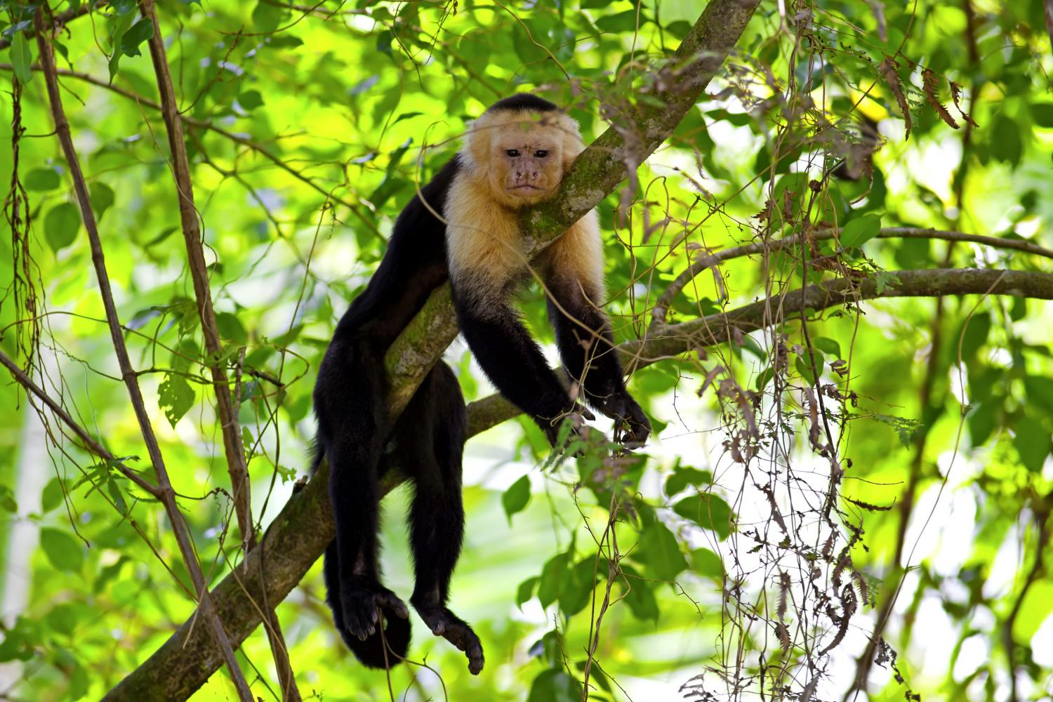 manuel-antonio-national-park-costa-rica-tour-learn-spanish-5