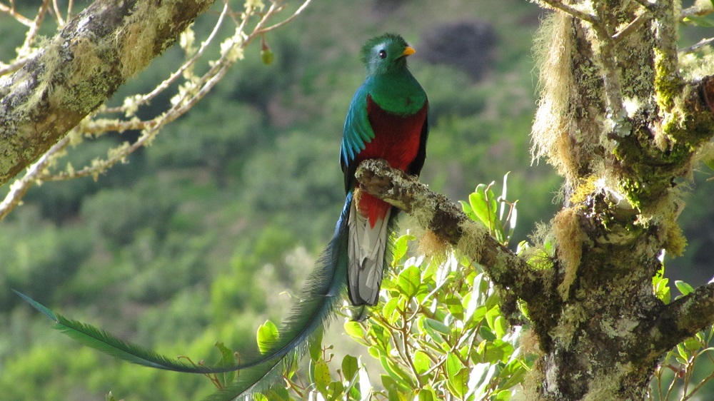 sighting-of-quetzals-tour-learning-spanish-in-costa-rica-4