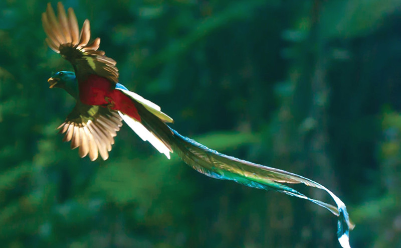 sighting-of-quetzals-tour-learning-spanish-in-costa-rica