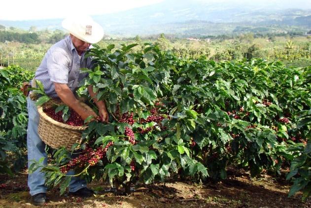 poas-volcano-la-paz-waterfall-coffee-tour-costa-rica-learn-spanish