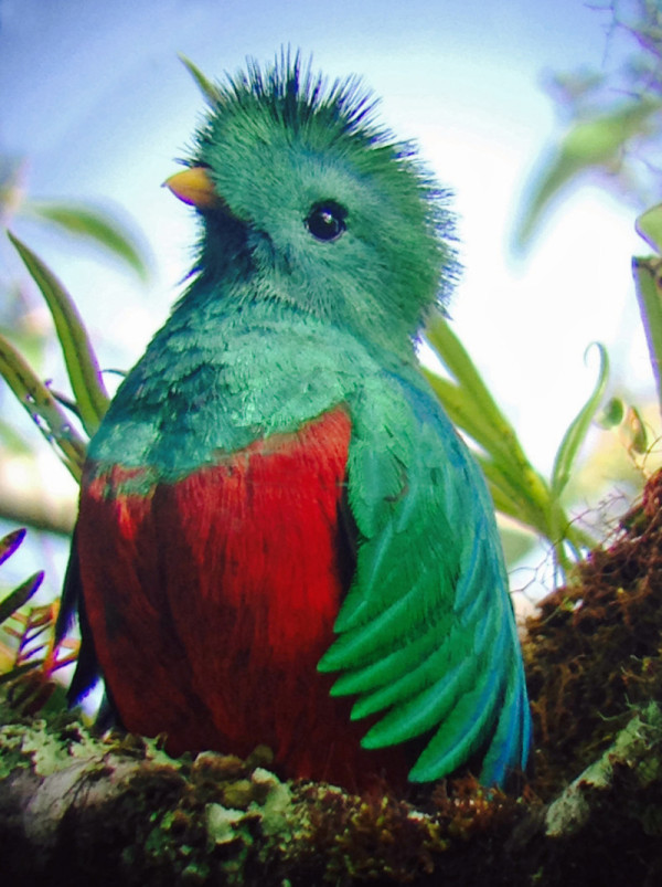 sighting-of-quetzals-tour-learning-spanish-in-costa-rica-2