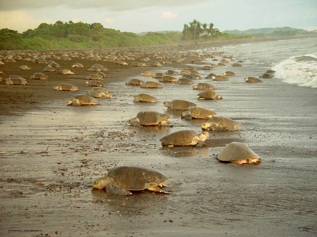 tortuguero-national-park-tour-learning-spanish-in-costa-rica
